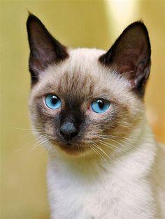 Cutest cat breed yahoo dating