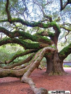 Google Image Result for http://amazingdata.com/mediadata31/Image/hot_weird_funny_amazing_cool4_thumbs_cool-trees-pics-part1-3_2009073101020913806.jpg