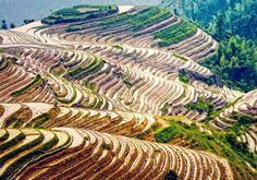 Les rizières de Longsheng, en Chine