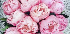4 flowers to hold you over until the next peony season  - countryliving.co.uk