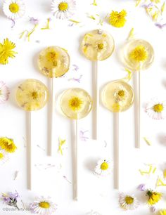 Honey and Lemon Floral Lollipops | 16 Amazing Dandelion Recipes To Make From Your Pulled Weeds