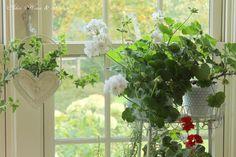 Aiken House & Gardens: Inside ~ Out