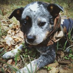 Realtree camo jackets for dogs -- sweet!