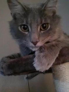 Art On Sun: ♥ cat ♥- Looks like my Herbert!