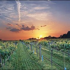 Arkansas wine country