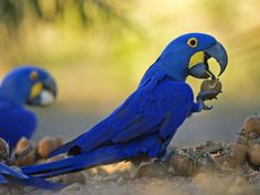 macaws eating images - Bing Images
