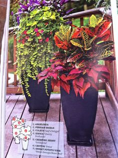love these potted plants