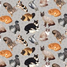 House Cats on Gray Fabric / cat Fabric Yardage / Cat Material / Furrever Friends Kitty Blank 9077 / House Cats Yardage and Fat Quarters by SewWhatQuiltShop on Etsy