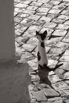 Tiny Cat, a photo from Algarve, South | TrekEarth