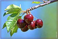 Cherries  Cerezas by avielpa, via Flickr