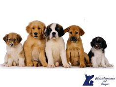 Esterilizar y adoptar. LA MEJOR CLÍNICA VETERINARIA DE MÉXICO. Con la sobrepoblación de animales que existe en las perreras y refugios e incluso en las calles, no es necesario ni conveniente hacer que los animales, sean machos o hembras se sigan reproduciendo. Pregunta a los especialistas sobre  . En Clínica Veterinaria del Bosque contamos con médicos veterinarios especialistas que con gusto le atenderán. www.veterinariadelbosque.com  #esteticacanina