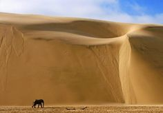 sand and elephant