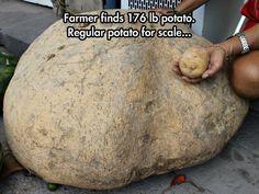A Giant Potato