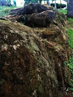 rockbed - infosys campus, bhubaneswar