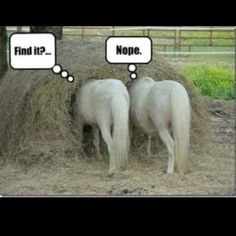 I Dont Think They Are Really Looking For Anything Funny Horse
