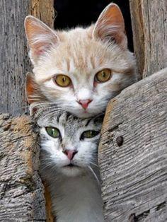 Ukáž? Vážne, toľko myší. Dnes bude zdravá večera . and like OMG! get some yourself some pawtastic adorable cat