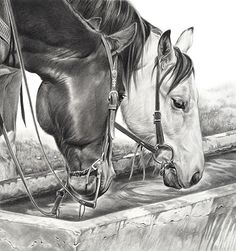 Windmill Juice by Mary Ross Buchholz, Graphite & Charcoal, 17 x 16 Horse Drawings, Pencil Art Drawings, Animal Drawings, Horse Pictures, Art Pictures, Horse Sketch, Horse Artwork, Cowboy Art, Animal Sketches