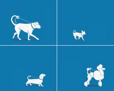 dogs walking themselves