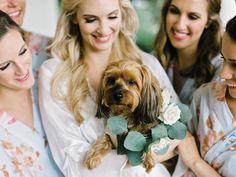 wedding dog Photographer: Amy Arrington Photography