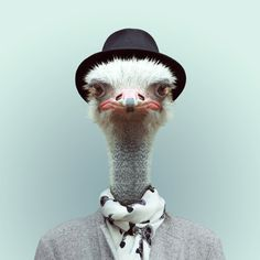 Des portraits danimaux habillés portraits animaux habilles 01