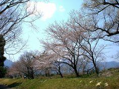 菰野町大羽根園区  大羽根園公園付近  平成24年4月9日撮影