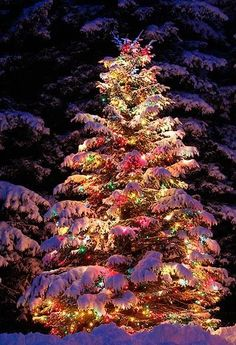 Love this tree ~~ The colored lights are beautiful with the snow!