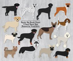 Dog Clipart Popular Dogs Breeds. #dogclipart #petclipart #dogbreeds #dogdrawing #dogillustration #goldenretrieverclipart #beagleclipart #boxerclipart