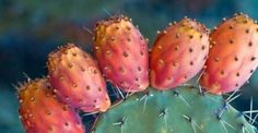 Edible ftuit of Mediterranian cactus Ant Crafts, Prickley Pear, Pear Fruit, Ficus, House Plants, Succulents, Healthy Recipes, Healthy Food, Animals