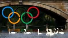 Swans are seen in Serpentine Lake before the Women's Marathon 10km Swimming at Hyde Park.