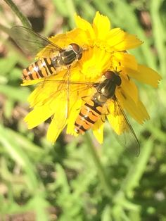 Dining al fresco 😋 Fresco, Insects, Creatures, Colour, Dining, Flowers, Animals, Color, Fresh