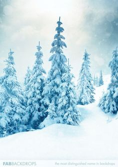 Winter snow trees christmas holiday photo backdrop in Fab Vinyl Christmas Photography Backdrops, Christmas Backdrops, Tree Photography, Background For Photography, Winter Snow, Winter Holidays, Studio Backdrops, Photo Tree, Christmas Background