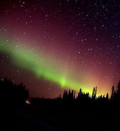 The Aurora Borealis shines near Nenana, Alaska