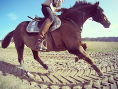 Brown Riding Boots, Horses, Instagram Posts, Animals, Animales, Animaux, Animal, Animais, Horse