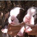 cachorros recién nacidos! #puppies