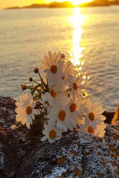 Popsters – Social Content Statistics and Analytics - Blumen Daisy Wallpaper, Sunflower Wallpaper, Nature Wallpaper, Wallpaper Backgrounds, Iphone Wallpaper, Daisy Love, Flower Aesthetic, Flower Images, Belle Photo
