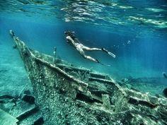 dugi otok - Google Search Croatia, Whale, Google, Animals, Animais, Animales, Animaux, Whales, Animal