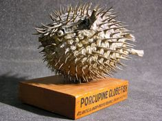 Porcupine globe fish