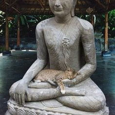 Cat sleeping in Buddha statue Baby Animals, Funny Animals, Cute Animals, Animal Funnies, Yin Yang, Crazy Cat Lady, Crazy Cats, Cat Memes, Funny Memes