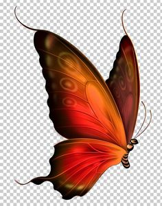 Butterfly Blue , Red and Brown Transparent Butterfly , orange and red butterfly painting PNG clipart Butterfly Images Clip Art, Butterfly Drawing, Butterfly Tattoo Designs, Butterfly Pictures, Red Butterfly, Butterfly Painting, Butterfly Wallpaper, Butterfly Illustration, Butterfly Watercolor