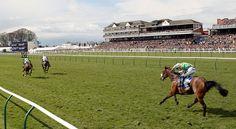 Ayr Racecourse.