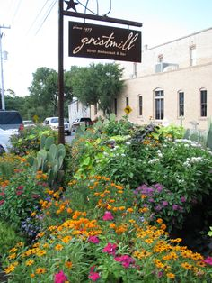 I have several pictures beside these flower barrels of summers in Gruene, TX while our girls were growing up.