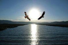 Manantiales de Armonías: Cuento personal...¨ El destino de las Águilas ¨...Así que hoy, después de ver a sus hijos con sus parejas, realiza un giro alrededor de ellos, y se aleja con un graznido, lanzándose en su vuelo más allá del mar de nubes que cubre las laderas del monte, dirigiéndose sin saberlo, a un nuevo destino...  El Destino de Las Águilas.......