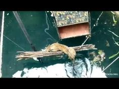 The Incredible Rescue of a Scared Young Leopard Who Had Fallen Into a 60-Foot Well in Junnar, India