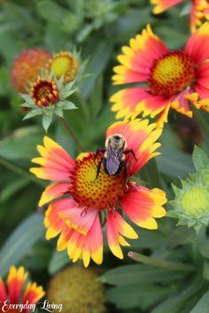 640 Plants That Love Texas Ideas Plants Planting Flowers Perennials