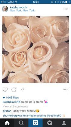 Gorgeous cream roses.