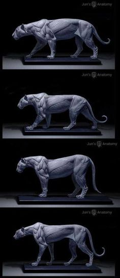 Anatomy reference sculptures