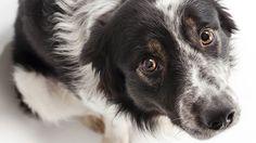 11 ένοχοι σκύλοι που έχουν μετανιώσει (Video)