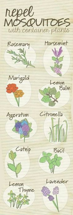 Plants that repel mosquitoes #mosquitorepellant #gardening
