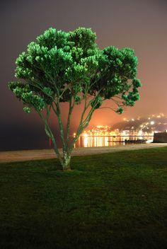 Oriental Bay - Wellington