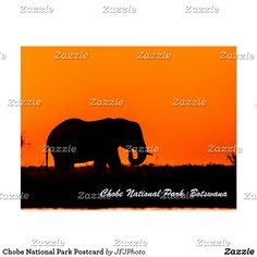 Chobe National Park Postcard